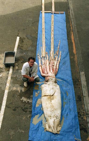 深海の生物の画像(8枚目)