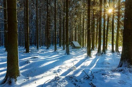 森の中の隠れ家の画像(6枚目)