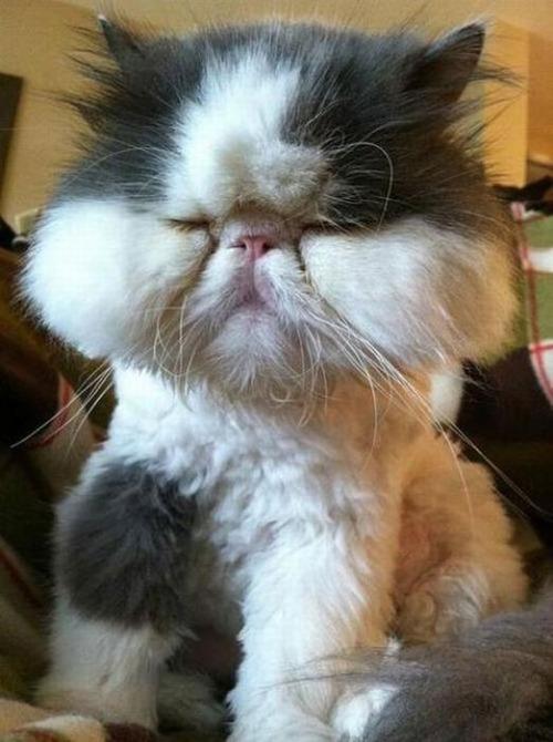 蜂に刺された猫が可愛いそうだけど可愛いwwwwの画像(7枚目)