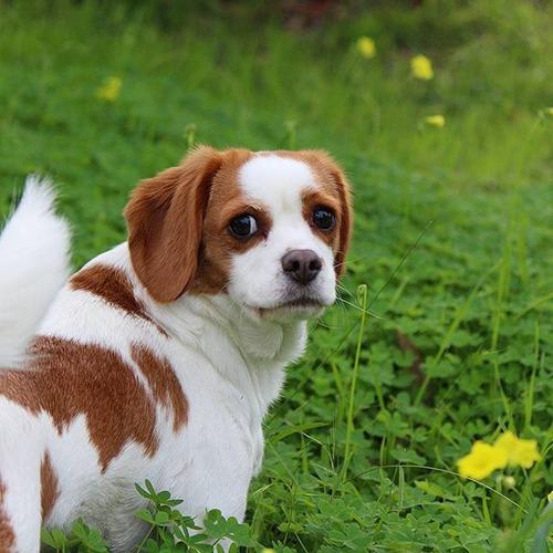 可愛い?可愛くない?ちょっと特徴的な雑種の犬の画像の数々!!の画像(9枚目)