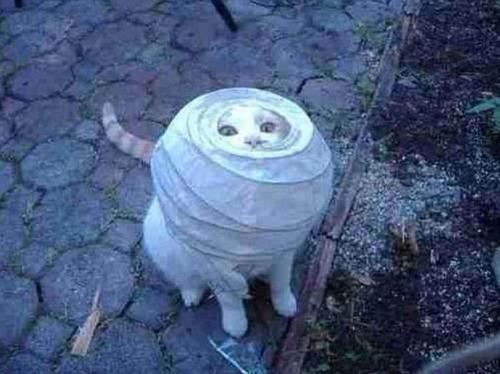 なぜ猫は狭いところが好きなのか??挟まっている猫の画像の数々wwwの画像(20枚目)