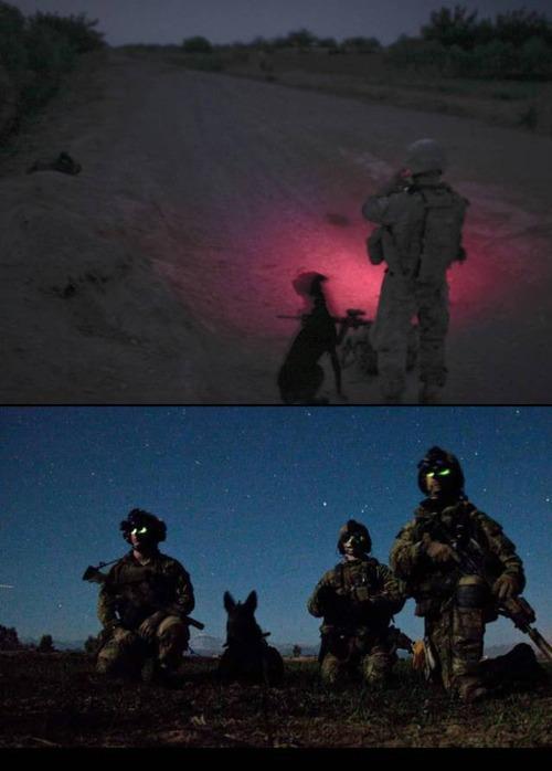 戦地での軍用犬の日常がわかるちょっと癒される画像の数々!!の画像(15枚目)