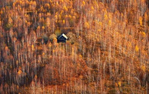 森の中の隠れ家の画像(44枚目)
