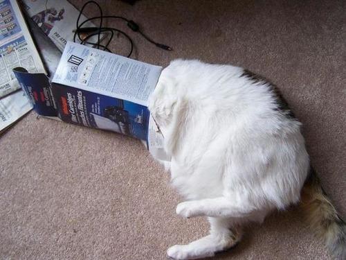 なぜ猫は狭いところが好きなのか??挟まっている猫の画像の数々wwwの画像(13枚目)