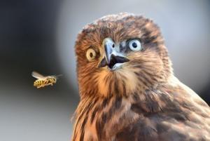 動物達が驚いている瞬間の表情をとらえた写真が凄い!の画像(8枚目)
