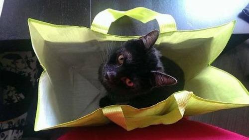 にゃんとも言えない、ちょっと困った猫の画像の数々!!の画像(35枚目)