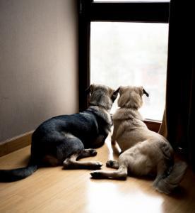 ずっと友達!仲がいい犬たちの画像が癒される!!の画像(25枚目)