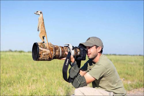 【画像】自然を撮影するカメラマンに興味津々の動物達!!の画像(13枚目)