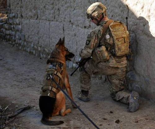 戦地での軍用犬の日常がわかるちょっと癒される画像の数々!!の画像(46枚目)