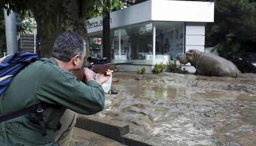洪水で動物達が大脱走した時の写真の数々wwの画像(11枚目)