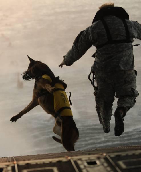 戦地での軍用犬の日常がわかるちょっと癒される画像の数々!!の画像(34枚目)