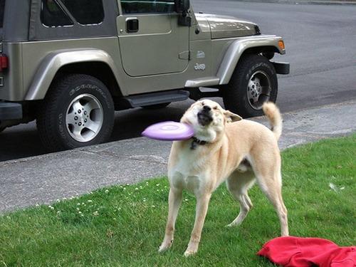 犬はバカ可愛い!!バカだけど憎めない可愛い犬の画像の数々!!の画像(26枚目)