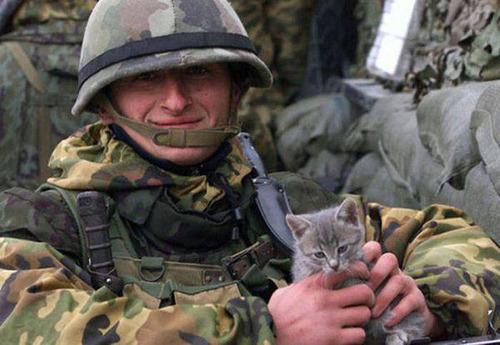 戦場にもネコは居る!!極限状態でも癒される戦場のネコの画像の数々!!の画像(23枚目)