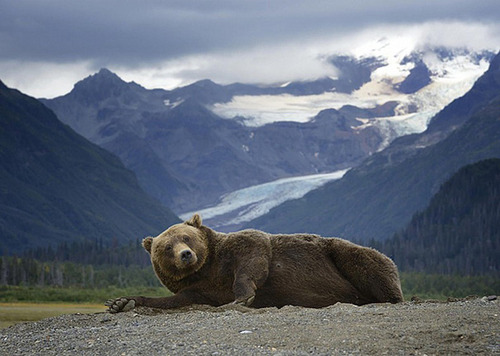 面倒くさい…疲れた…眠い…そんな感じの動物たちの画像!!の画像(22枚目)