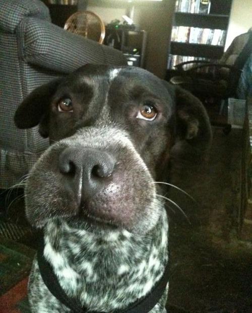 ハチを食べた犬の画像(14枚目)