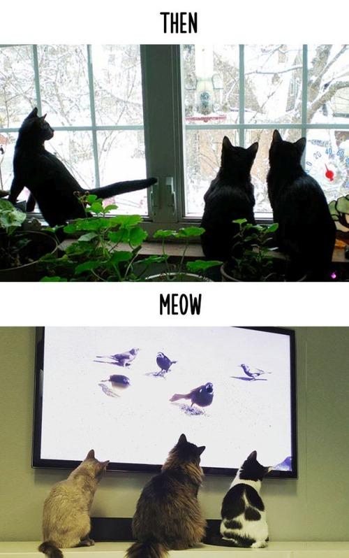 テクノロジーの進化がネコ達に与えた影響の比較画像の数々!!の画像(4枚目)