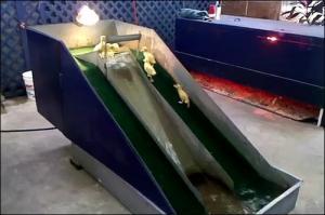 子供のアヒル用の滑り台の画像_000004966