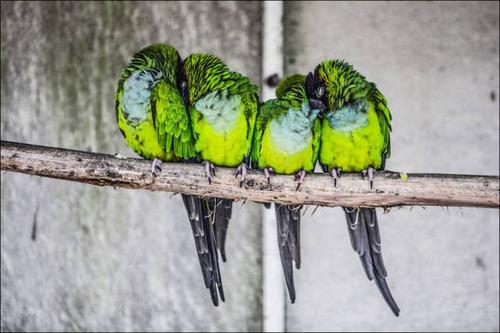 超過密!密集状態の鳥の画像がもふもふで癒されるwwの画像(21枚目)