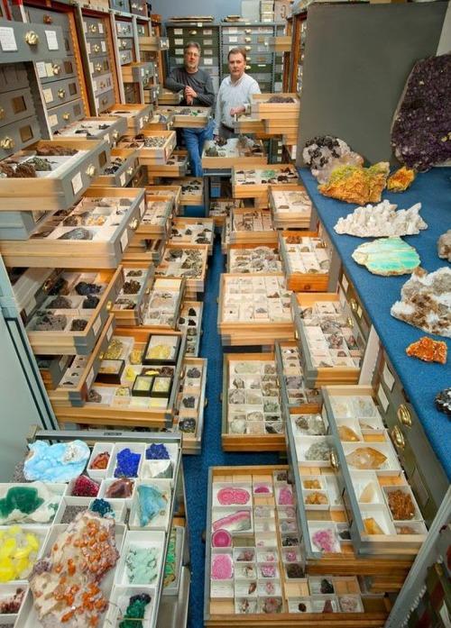 【画像】アメリカを代表するスミソニアン博物館の標本の保存倉庫が凄い!!の画像(6枚目)