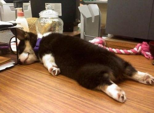 子犬が眠っているの画像(3枚目)