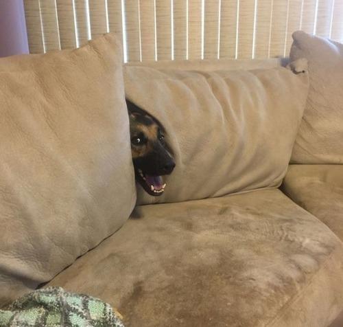 挟まっている犬の画像(1枚目)