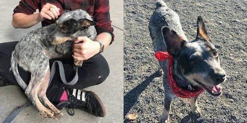 捨犬の時と良い飼主が見つかった時のワンちゃんのほのぼの比較画像の数々!!の画像(3枚目)