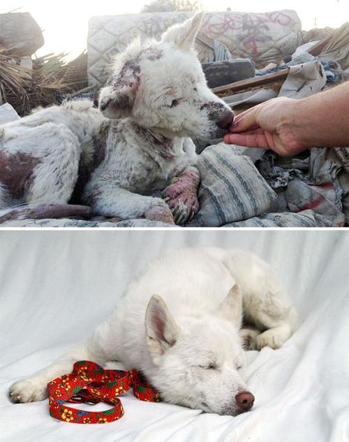 野良犬が保護された後の画像(2枚目)