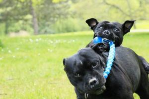 ずっと友達!仲がいい犬たちの画像が癒される!!の画像(15枚目)