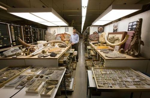 【画像】アメリカを代表するスミソニアン博物館の標本の保存倉庫が凄い!!の画像(10枚目)
