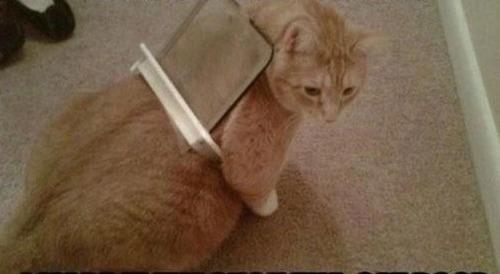 なぜ猫は狭いところが好きなのか??挟まっている猫の画像の数々wwwの画像(2枚目)