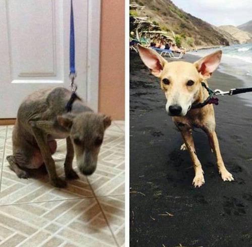 捨犬の時と良い飼主が見つかった時のワンちゃんのほのぼの比較画像の数々!!の画像(4枚目)