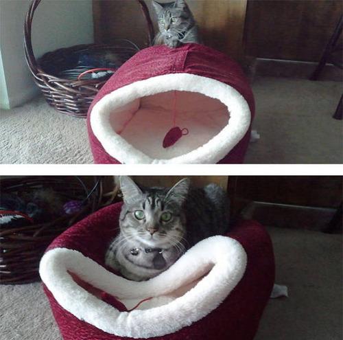 にゃんとも言えない、ちょっと困った猫の画像の数々!!の画像(22枚目)