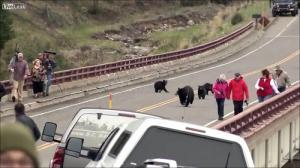 子連れのクマが観光客を追いかける怖すぎる動画…_000012332