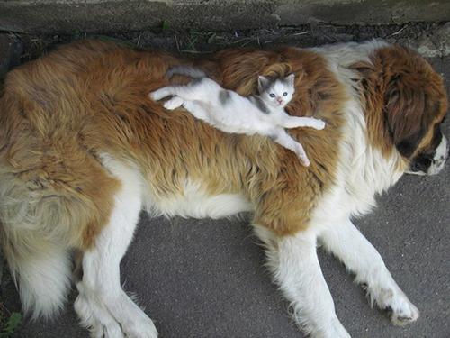 ほのぼのする!仲の良い犬と猫の画像の数々!!の画像(19枚目)