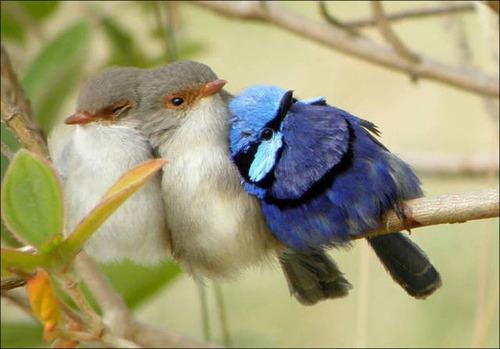 超過密!密集状態の鳥の画像がもふもふで癒されるwwの画像(8枚目)