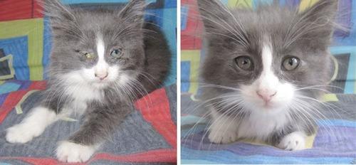 【画像】子汚い野良猫を拾って育てたら、こんなに可愛いニャンコになりましたよ!の画像(5枚目)