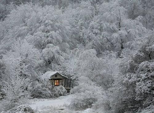 森の中の隠れ家の画像(45枚目)