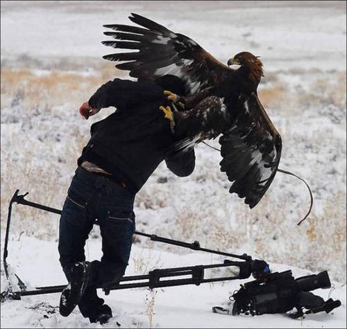 【画像】自然を撮影するカメラマンに興味津々の動物達!!の画像(17枚目)