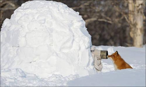【画像】自然を撮影するカメラマンに興味津々の動物達!!の画像(26枚目)