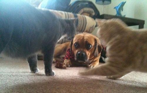 犬はバカ可愛い!!バカだけど憎めない可愛い犬の画像の数々!!の画像(22枚目)