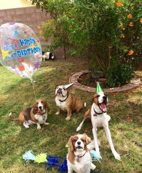 動物達の誕生日の写真の数々!!の画像(31枚目)