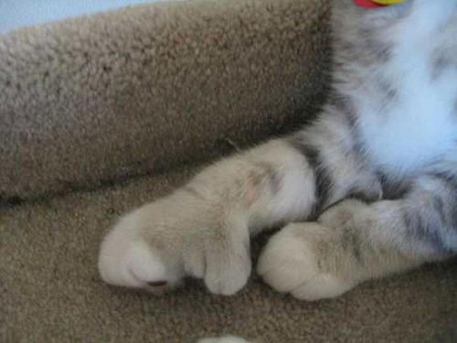 蜂に刺された猫が可愛いそうだけど可愛いwwwwの画像(2枚目)