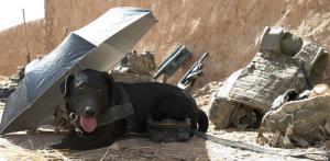 辛くても癒される!軍用犬でほのぼのしている写真の数々!!の画像(9枚目)