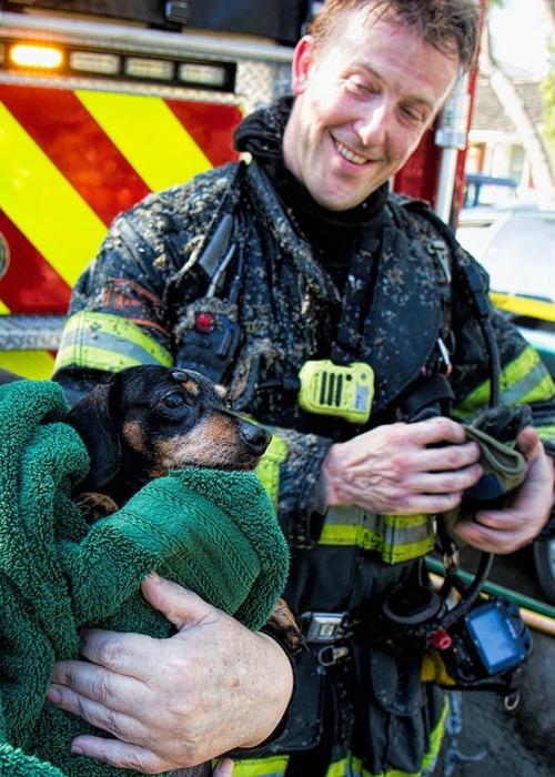 【画像】動物達も本気で助ける!ちょっと癒されるレスキュー隊の仕事の様子!!の画像(5枚目)