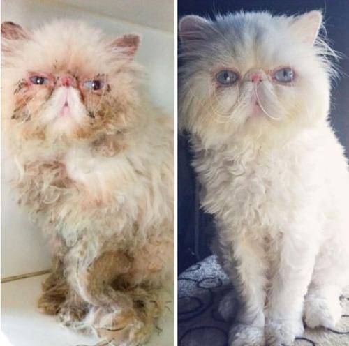 【画像】子汚い野良猫を拾って育てたら、こんなに可愛いニャンコになりましたよ!の画像(12枚目)