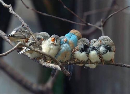 超過密!密集状態の鳥の画像がもふもふで癒されるwwの画像(1枚目)