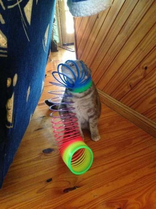 なぜ猫は狭いところが好きなのか??挟まっている猫の画像の数々wwwの画像(3枚目)
