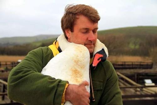 傷ついた白鳥を保護!白鳥と人の心温まる画像!!の画像(2枚目)