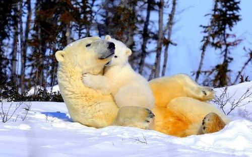 ほのぼのするけどちょっと怖い!幸せそうな動物たちの写真の数々!の画像(8枚目)