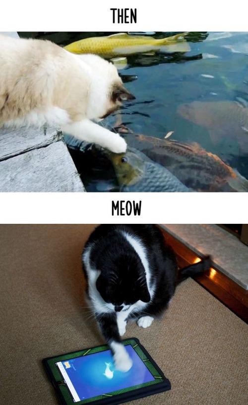 テクノロジーの進化がネコ達に与えた影響の比較画像の数々!!の画像(12枚目)